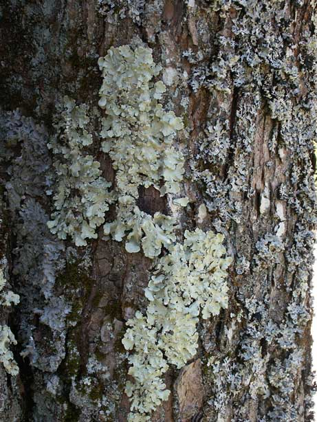 Pay attention to the small stuff - lichen on a tree
