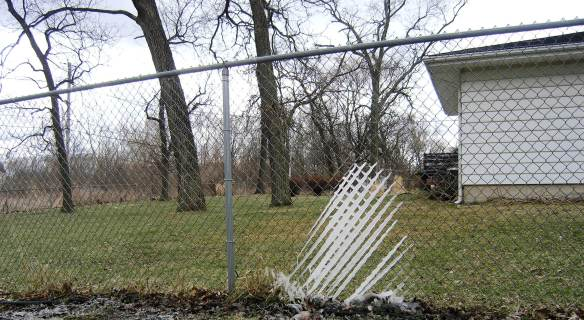 Icy Fingers on Chain Link Fence by Laurie Buchanan