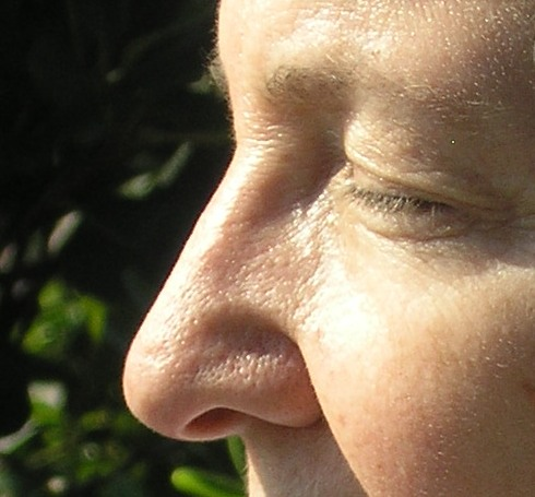 Odors stimulate chemoreceptors in the nose by Len Buchanan