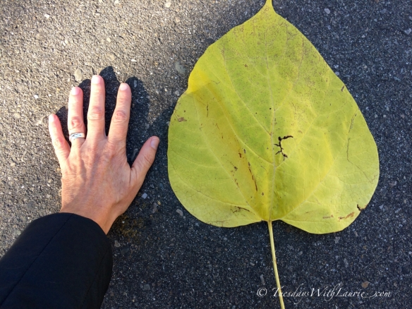 Giant leaf - 2